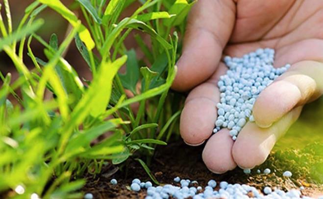 Top 10 phân bón hữu cơ vi sinh