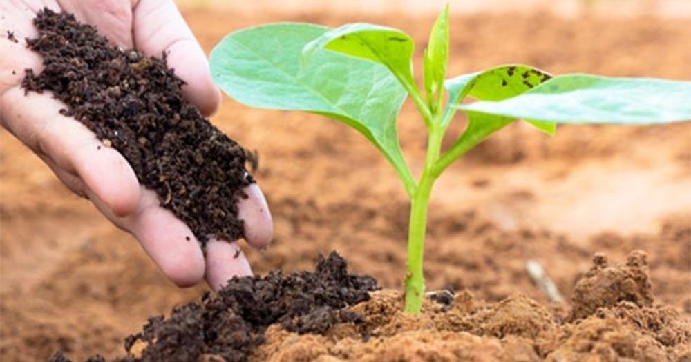 Phân hữu cơ vi sinh giúp cây trồng hấp thụ đầy đủ dưỡng chất