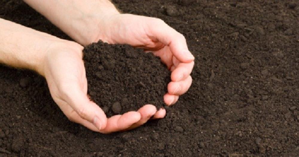 Đất đen là loại đất phổ biến ở ruộng, vườn