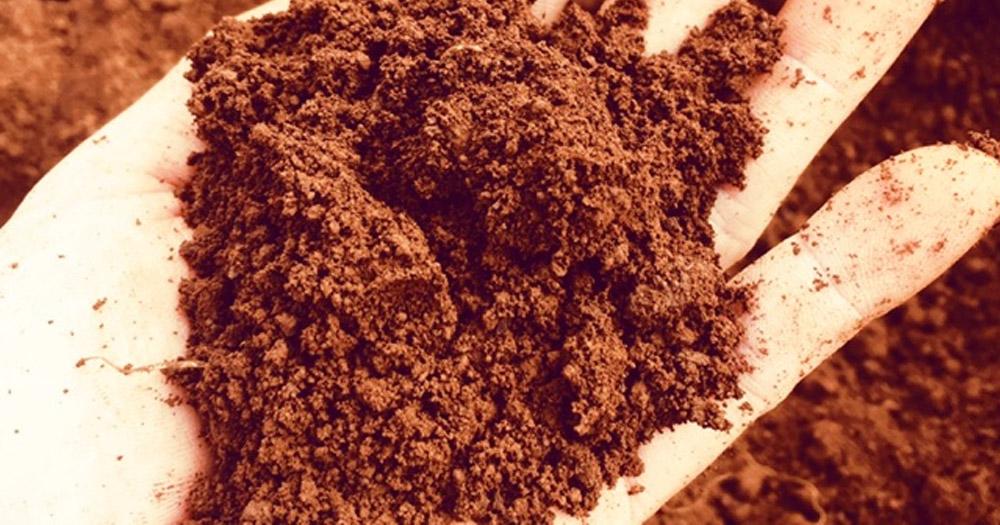 Đất đỏ có tầng chất hữu cơ kém