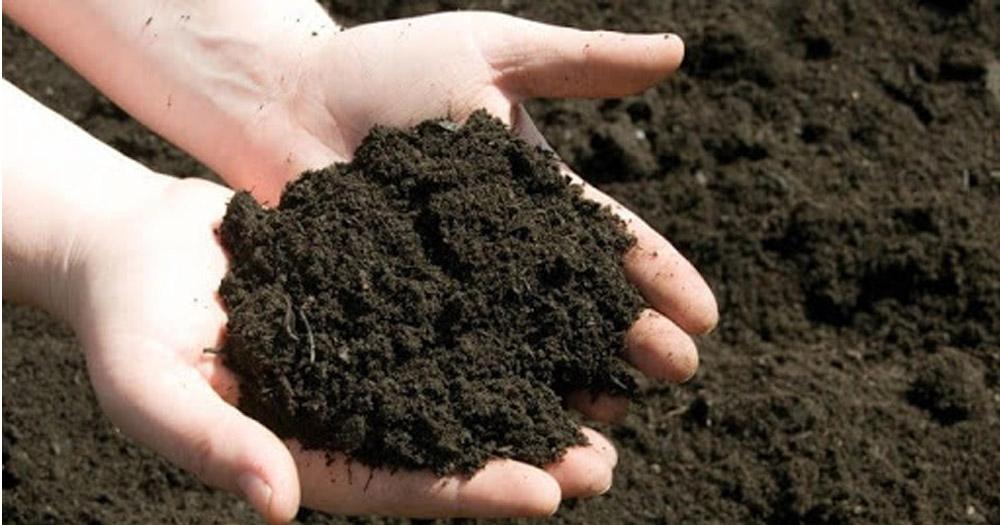 Đất vô cơ bao gồm đất sét nung và đá nham thạch, xỉ than