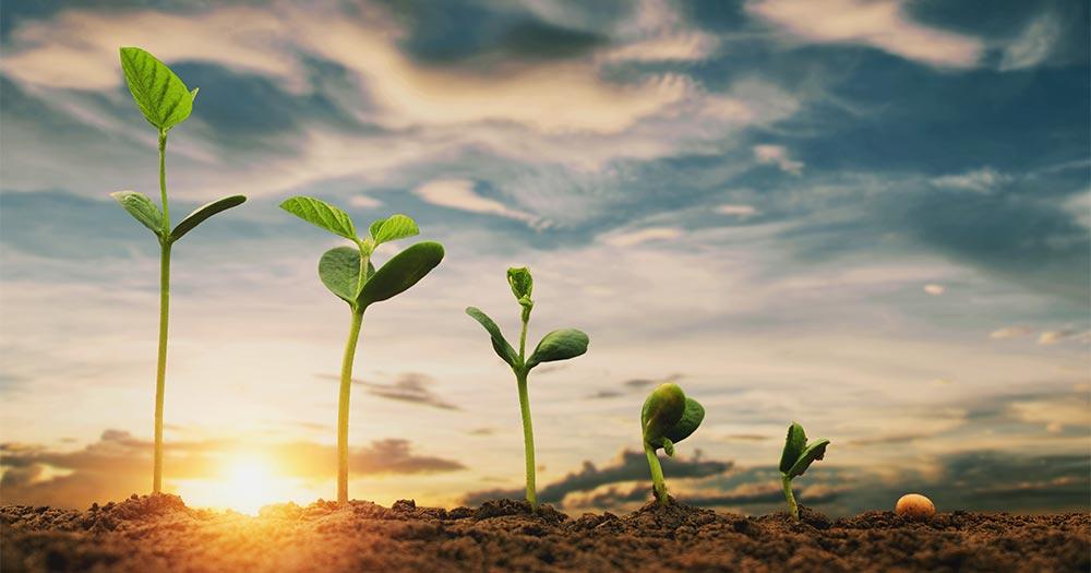 Giúp cây trồng phát triển cân đối, ổn định