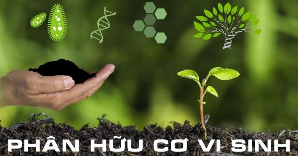 Phân hữu cơ vi sinh là loại phân bón có chứa từ một đến nhiều chúng vi sinh vật có ích.