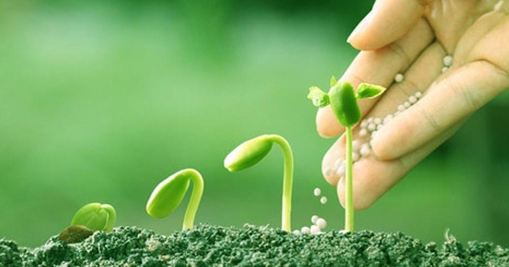 Phân Ure trong trồng trọt