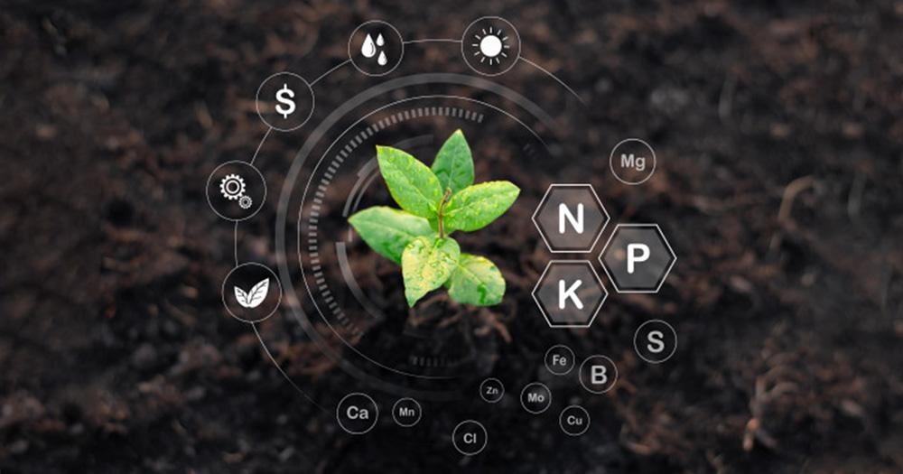 Kinh nghiệp bón phân NPK cho năng suất cao