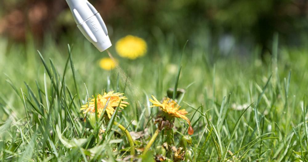 Hướng dẫn diệt cỏ bằng phân bón đơn giản, an toàn