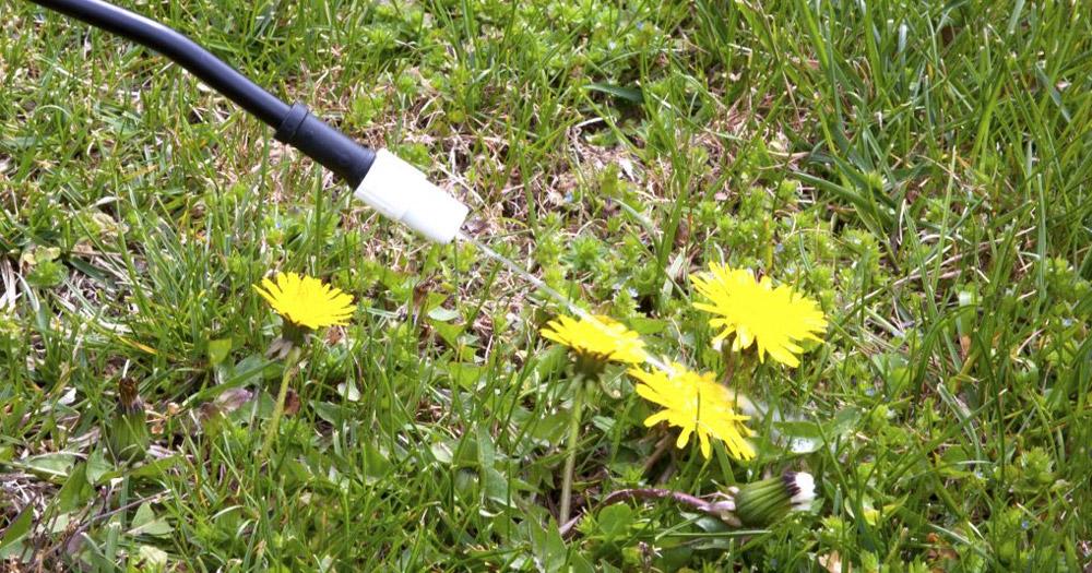 Lợi ích của việc diệt cỏ bằng phân bón hóa học