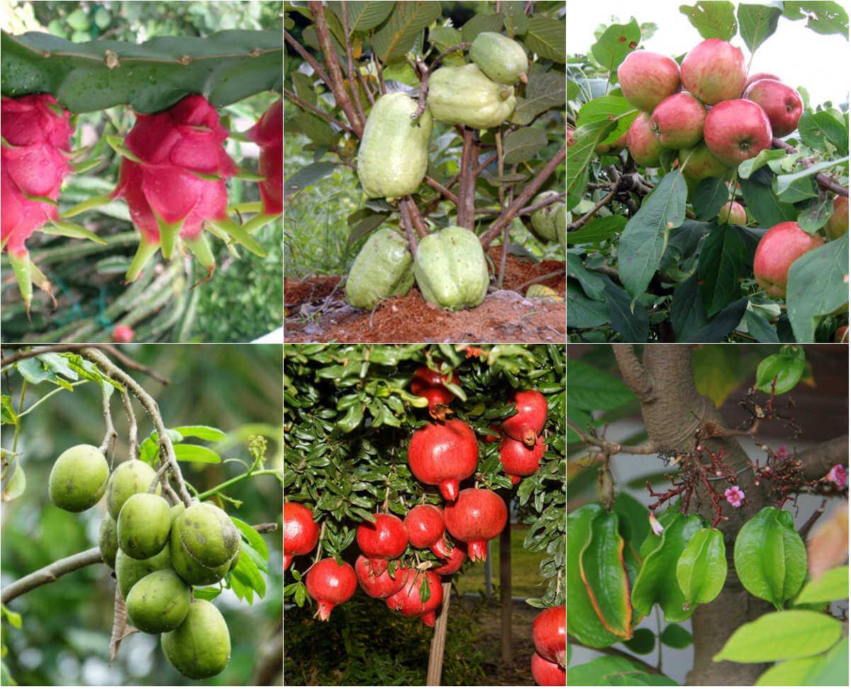 trồng cây gì có đầu ra ổn định